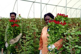 Farm Workers with Roses